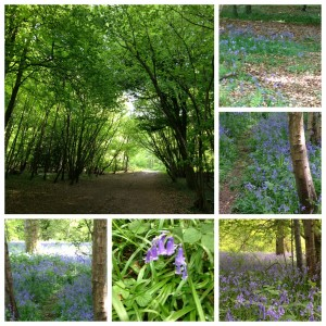Banstead Woods 1