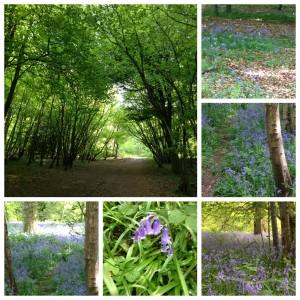 Banstead Woods 1