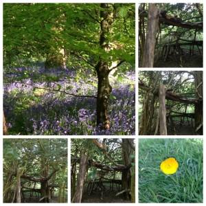 Banstead Woods 2