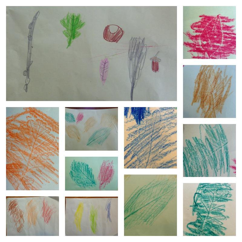 Leaf drawings and rubbings 1