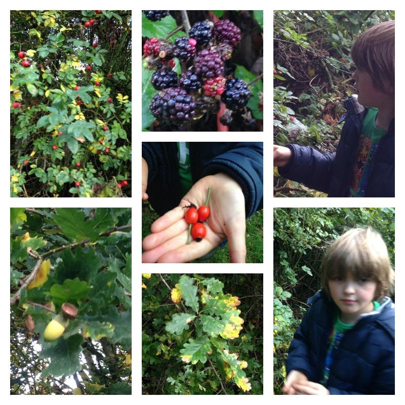 berry walk 2