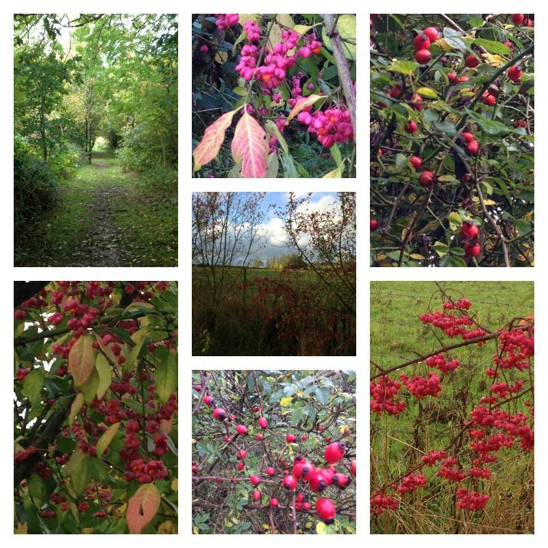 berry walk 3