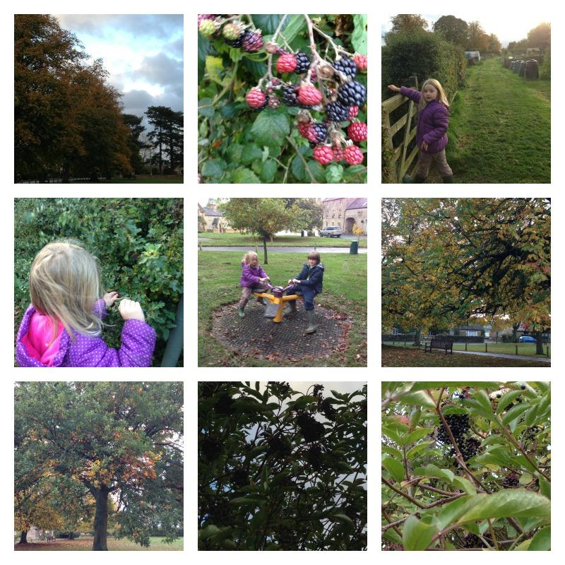 berry walk 5