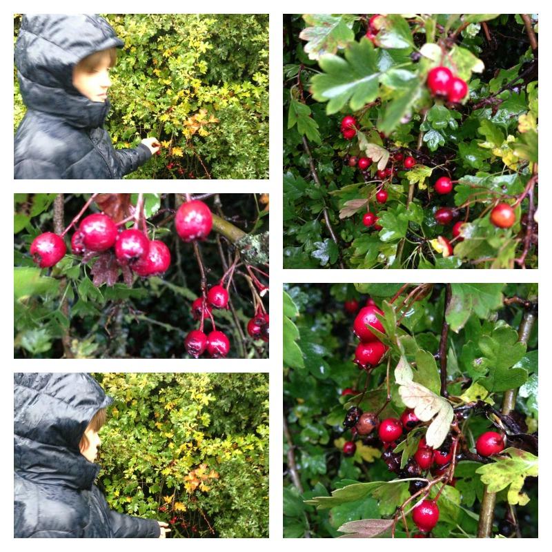 haw berries