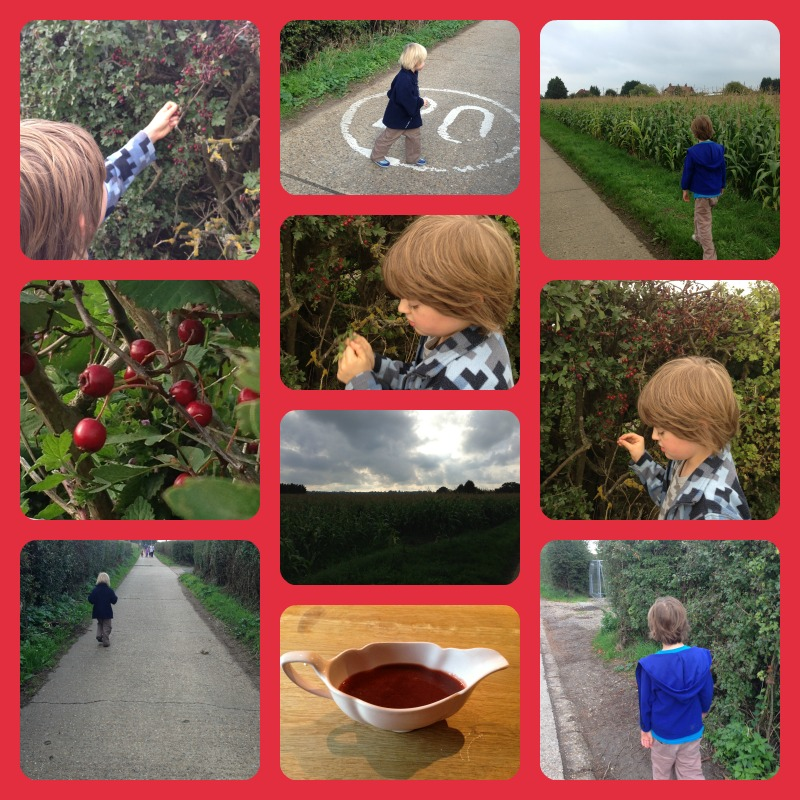 haw berry picking