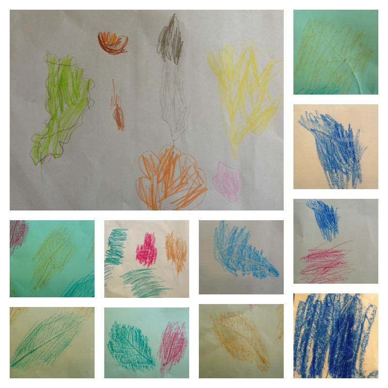 leaf drawings and rubbings 2