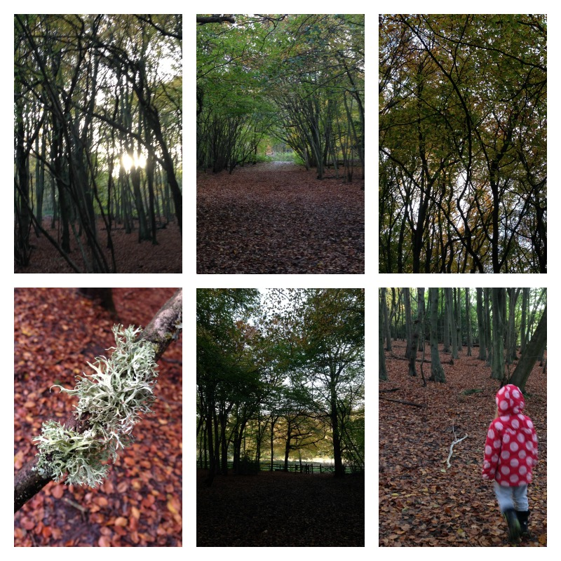 gruffalo woods 6